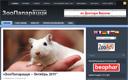 Создание, продвижение и маркетинговая поддержка интернет-проектов