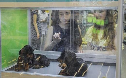 Девушки у витрины зоомагазина Фото: РИА Новости