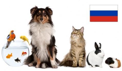 Статистика зоорынка России за 2015 год