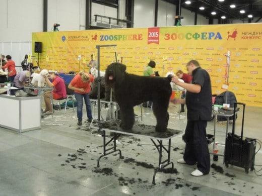 Международная выставка товаров и услуг для домашних животных «Зоосфера» 2015