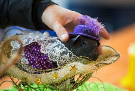 Для гостей мероприятия вход в зал был бесплатным, а в программе выставки были многочисленные конкурсы как для владельцев животных и их питомцев, так и для всех желающих. Некоторые из них собирали большое число зрителей, такие как конкурс костюмов для морских свинок или же соревнование «Узнай свою крысу по запаху».