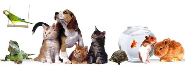 Потребительское поведение владельцев домашних животных. Весна 2016