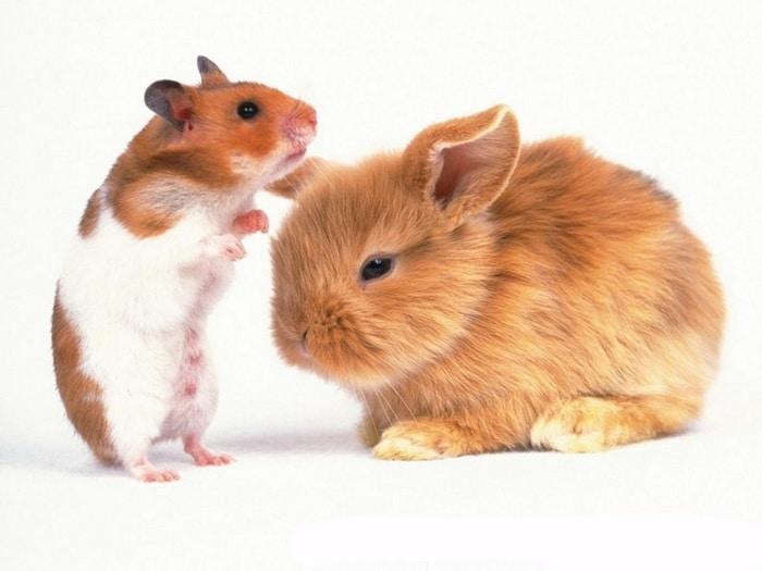 Потребительское поведение при выборе кормов, лакомств и сена для грызунов и кроликов. Весна 2016