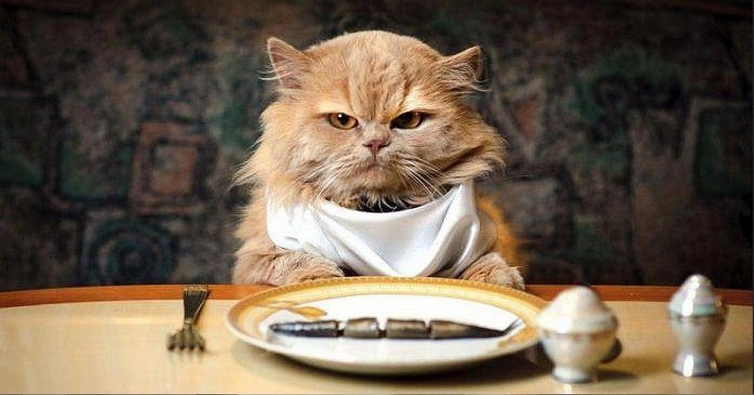 Если кошка это ест — зачем платить больше?