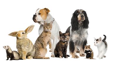 Статистика немецкого рынка домашних животных