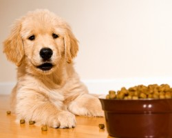 В 2011 году производство готовых кормов для домашних животных выросло на 3%