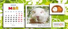 """Агентство """"Родемакс"""" разработало дизайн календаря для портала Morsvinki.ru 9"""