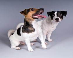 Cats&Dogs – лидер рынка зоо ритейла по количеству магазинов
