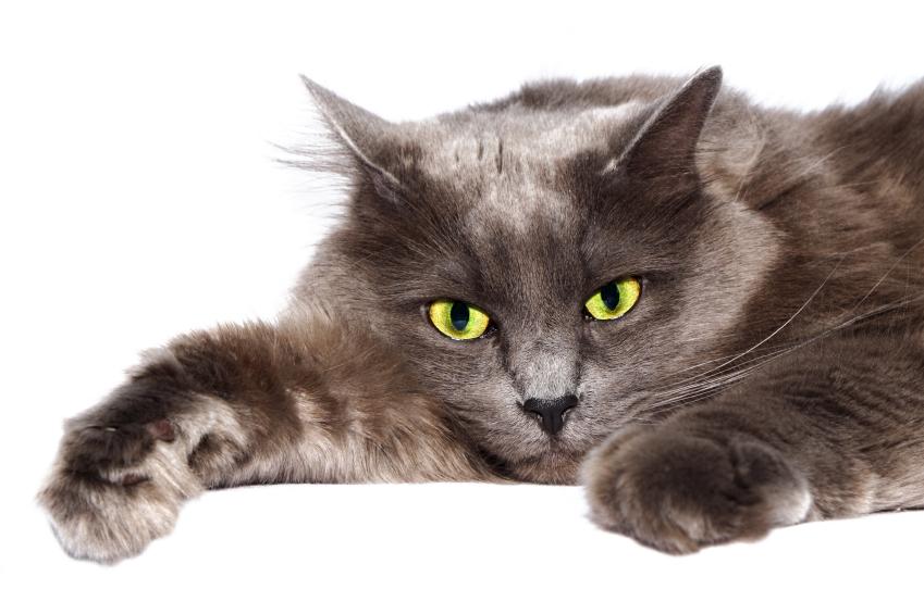«Кошки-мышки» или во что играют кошки