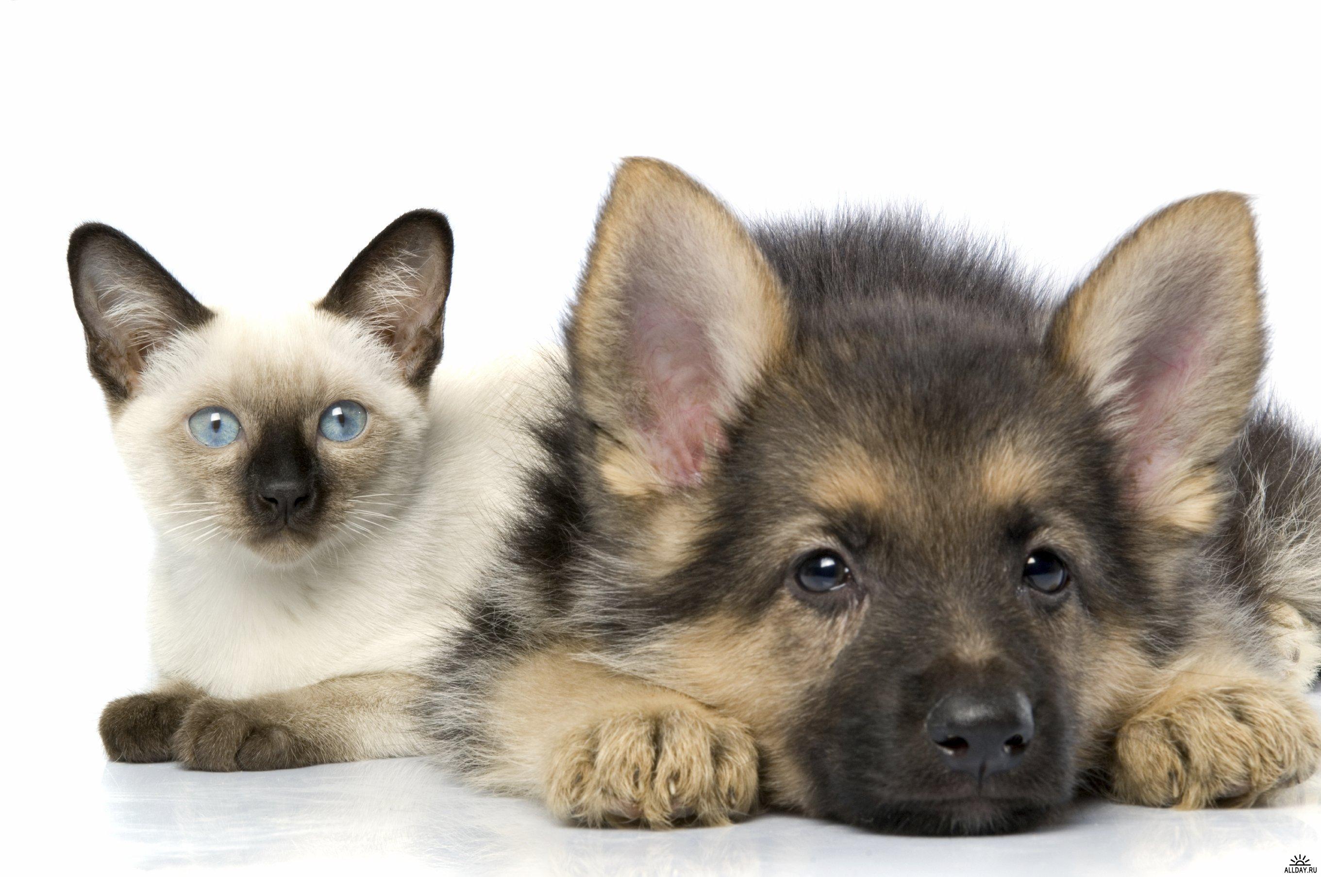 Москвичи предпочитают собак, а петербуржцы - кошек