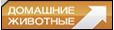 Телеканал «Домашние животные»: программа «Мир питомцев. События» Серия 26 1
