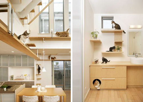 Дом, где развлекаются коты