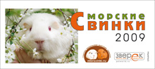 Агентство «Родемакс» разработало дизайн календаря для портала Morsvinki.ru