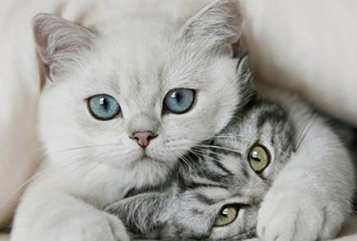 Диета для котиков