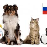 Продажи товаров для домашних животных в России