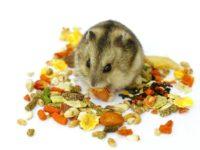 Корма для грызунов и кроликов: потребительские предпочтения
