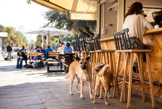 В пятницу 26 августа в Тель-Авиве, впервые в Израиле, отметили специальный день собак