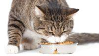Роскачество представило первое исследование кормов для домашних животных