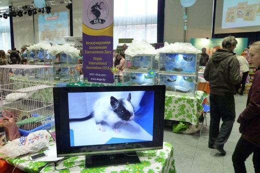 6 апреля 2019 года в Москве, в помещении бизнес-центра «Амбер-Плаза» прошла очередная выставка домашних животных «ЗооПалитра».