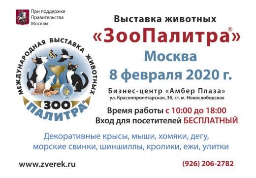 8 февраля 2020 года в Москве в здании бизнес-центра «Амбер Плаза» прошла выставка домашних животных «ЗооПалитра», открывшая шестнадцатый выставочный сезон.