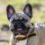 Ветврачи назвали стоп-лист продуктов для собак