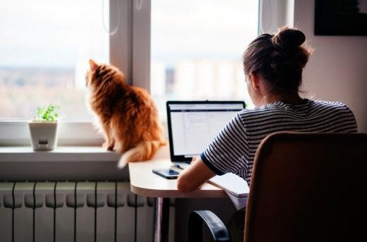 Mars Petcare и Яндекс.Маркет провели исследование среди владельцев домашних животных и выяснили, как за год изменились их отношения к животным.