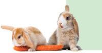 Корма для декоративных грызунов и кроликов