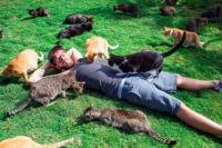 Сколько стоят кошачьи VIP-апартаменты