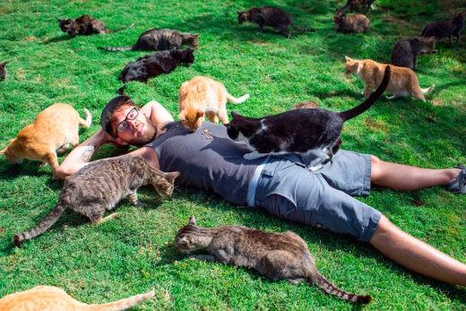 Сколько котов живет в разных странах Европы. Фото: Getty Images